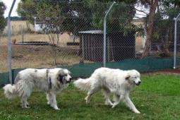 mountaindogs.jpg